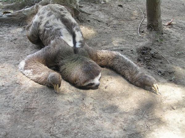 Preguiça NÃO mata!