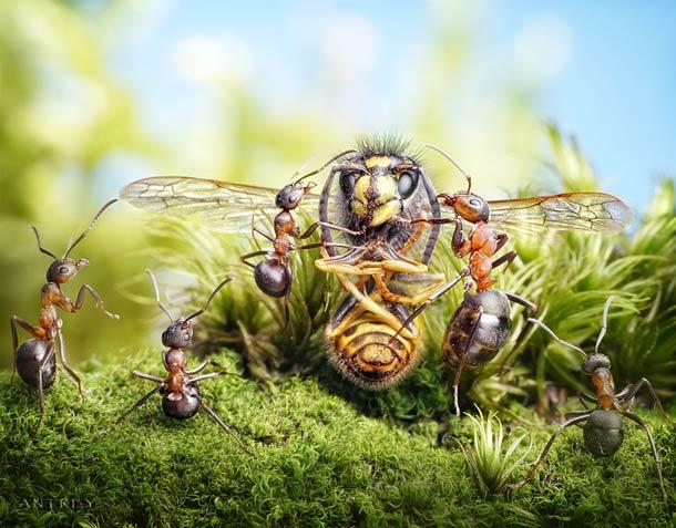 Projeto fotográfico: Contos de formigas