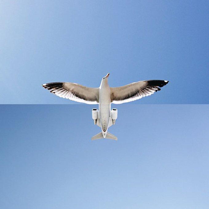 Projeto Fotográfico: ComboPhoto - Combinações engraçadas e inusitadas