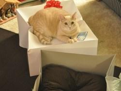 15 exemplos hilários da bizarra lógica dos gatos