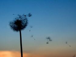 Como são formadas as nossas memórias e como as perdemos?