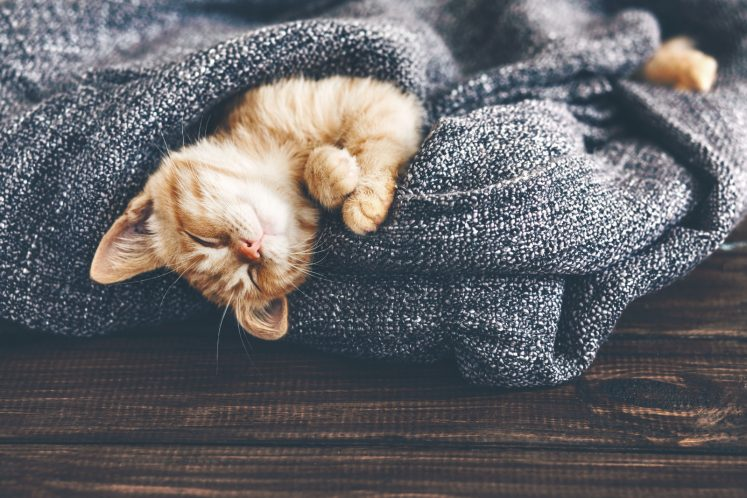 cat relaxing in a grey blanket