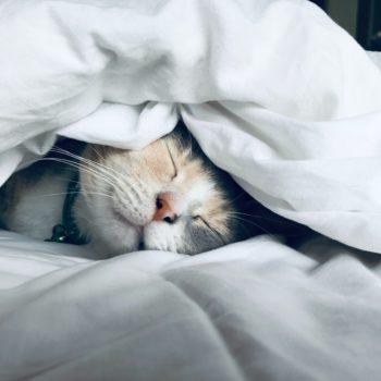 cat sleeping under white comforter