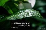 IMG_0158 copy