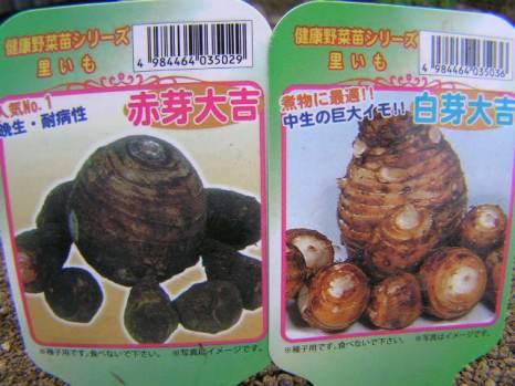 「里芋 白芽」の画像検索結果