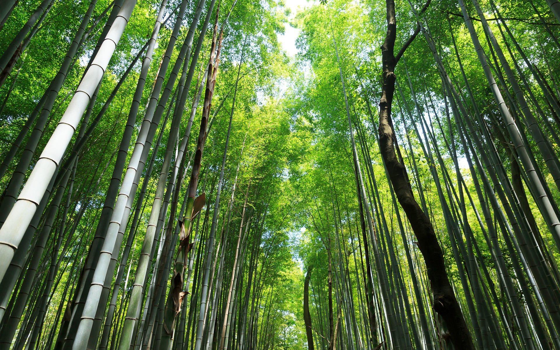 2013年新緑の京都・嵯峨竹林の壁紙(計6枚) - 壁紙&日々駄文