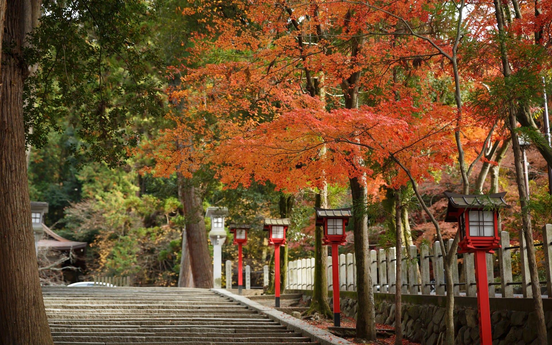 2013年紅葉の京都・吉田神社の壁紙その2(計16枚) - 壁紙&日々駄文