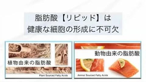 脂肪酸は不可欠