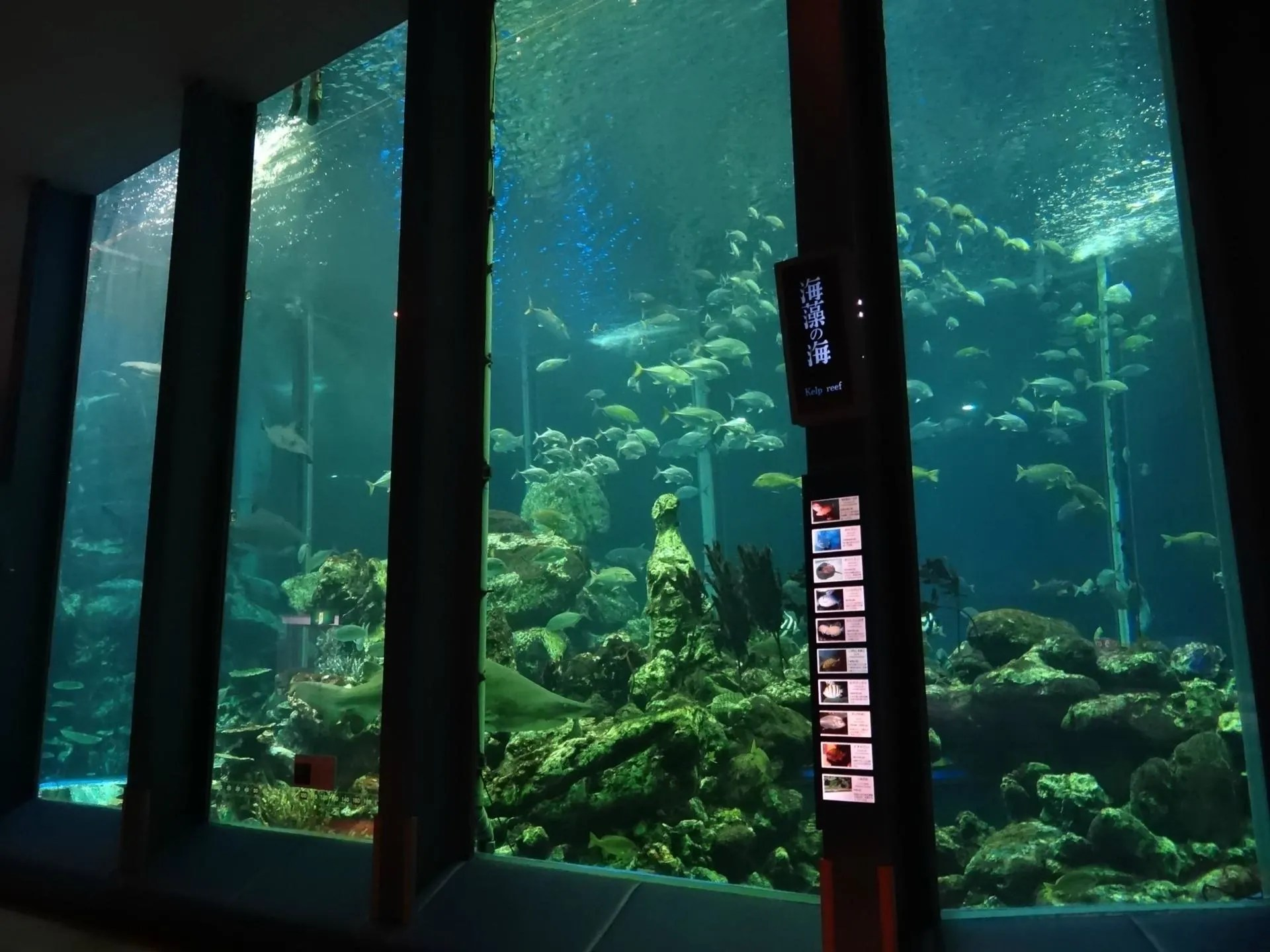 東海大學海洋科學博物館~水族館も博物館です! | 水族館とか動物園を巡って