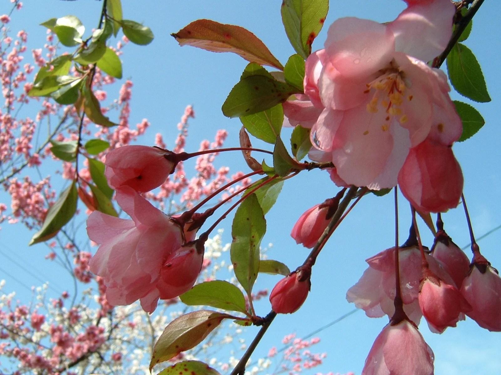 花海棠・花水木・深山黃華鬘・アオキの花 - みどりの一期一會