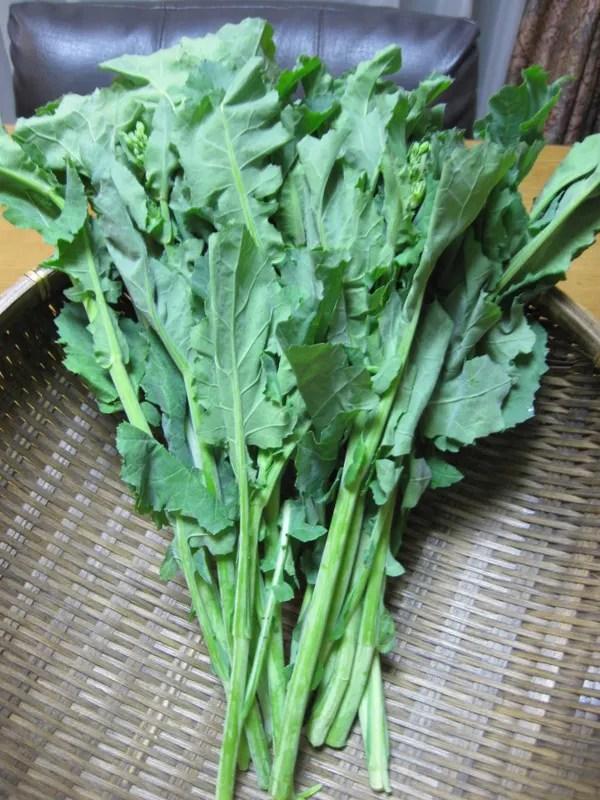 かき菜♪ - お野菜を食べよん!