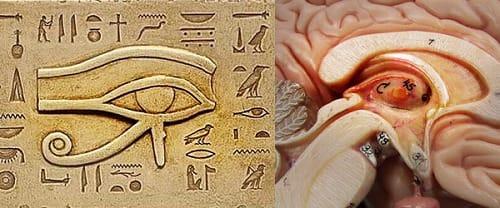 「松果体とピラミッド内部」の画像検索結果
