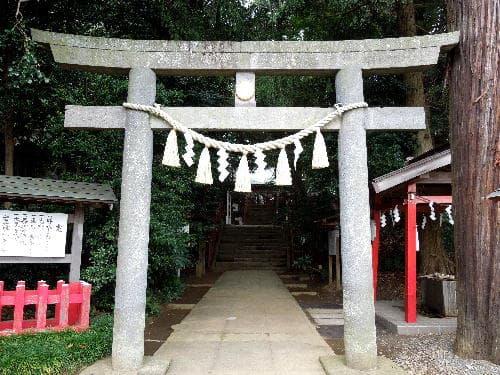 樹齢1300余年の杉の樹 - アートな旅