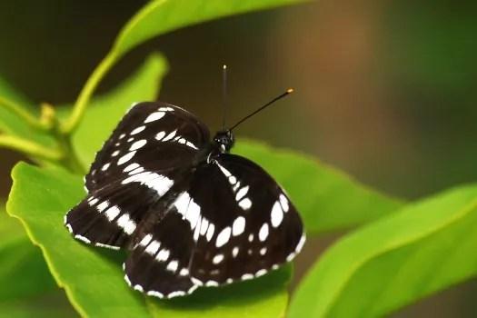 蝶 (2) - 閑人の暇つぶし