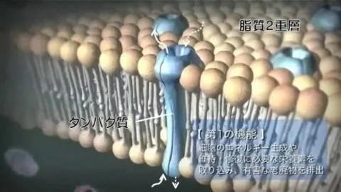脂質2重層とタンパク質