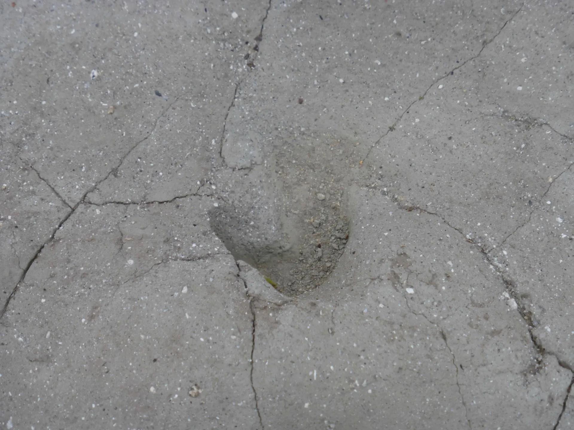 石川足跡化石 調査 - 富田林百景+ 「とんだばやし」とその周辺 ...