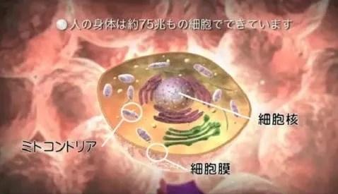 ヒトの身体は細胞でできています