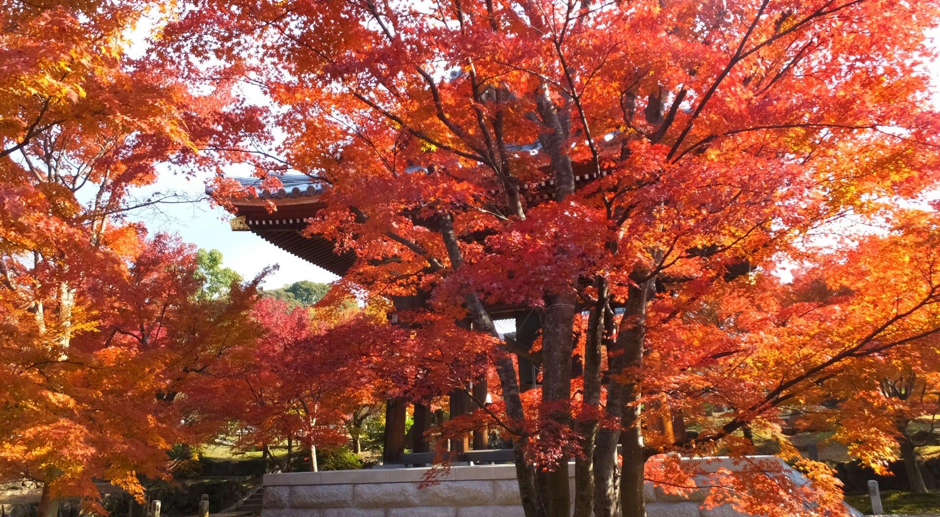智積院紅葉 終盤 - 京都で定年後生活