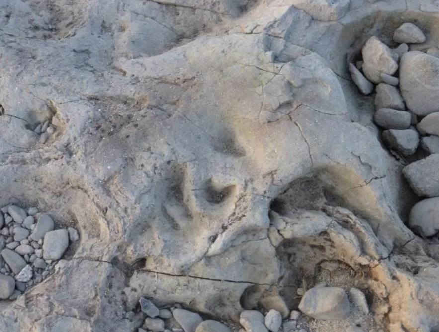 石川足跡化石 オ-1 - 富田林百景+ 「とんだばやし」とその周辺の ...