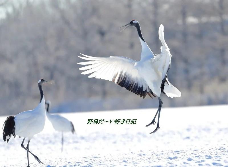 北海道は,春 の 気 配 に ‥‥ ♪ - 野鳥だ~い好き日記