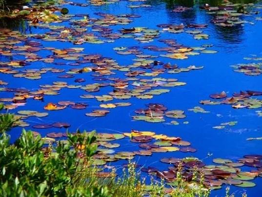 「八甲田山スイレン沼」の画像検索結果
