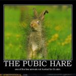 The Pubic Hare