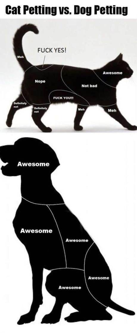 Cat Petting vs. Dog Petting
