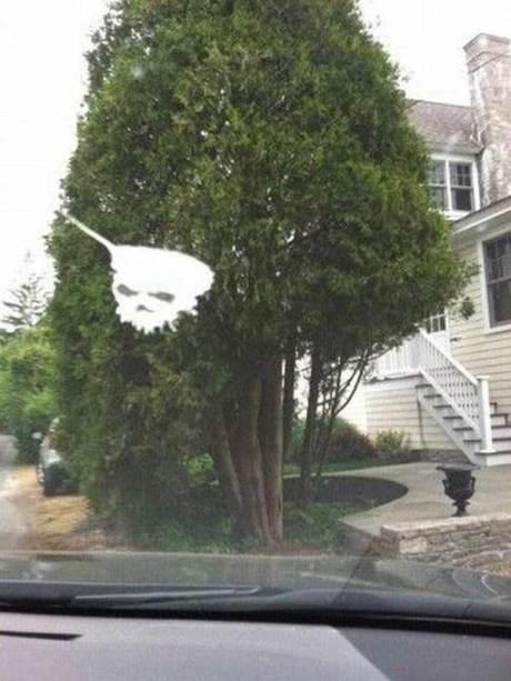 Bird poop looks like a skull!