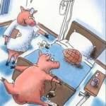 A Pig Walks Into a Hospital…