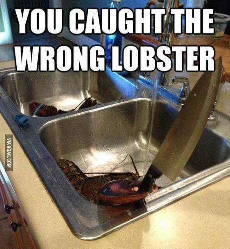 """Lobster with a Knife: """"You Caught the Wrong Lobster!"""""""