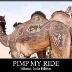 Camel Art, Anyone?