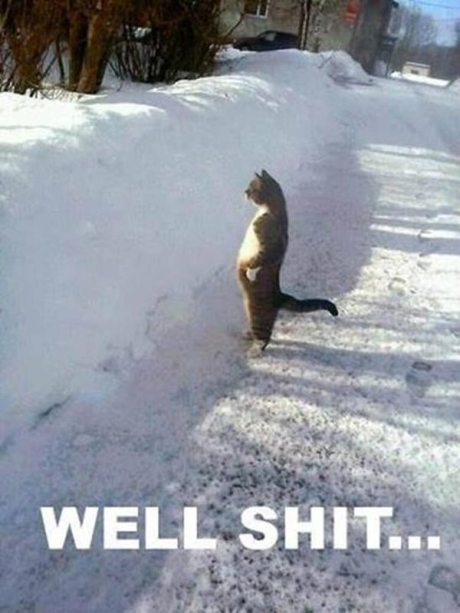 "Cat in Snow: ""Well, Shit!"""