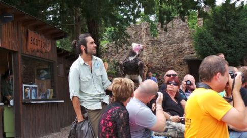 PassAlsace Montagne des singes Volerie des aigles Musee d'art moderne