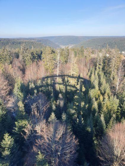 Sentier des cimes Bad Wilbad foret noire Allemagne