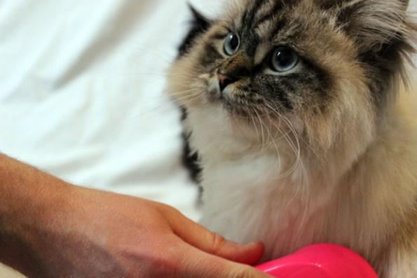 Tangle Teezer für Katzen