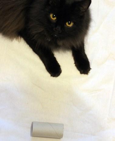 Katzenspielzeug selbst gebastelt aus Küchenrolle