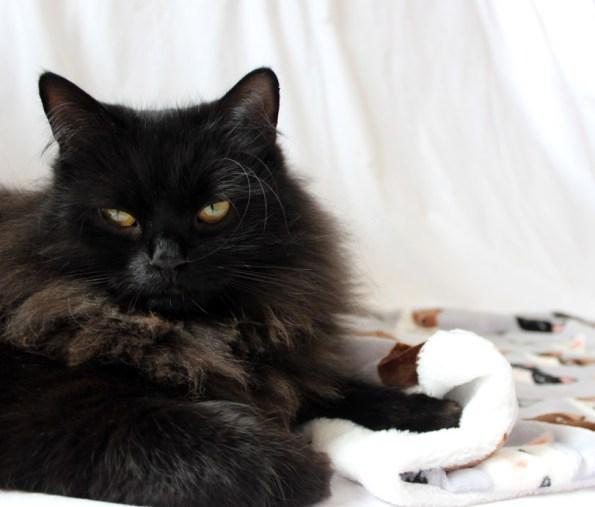 Schwarze Katze mit Kuscheldecke