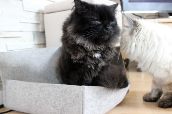Katzenbett von stylecats- Zorro genießt