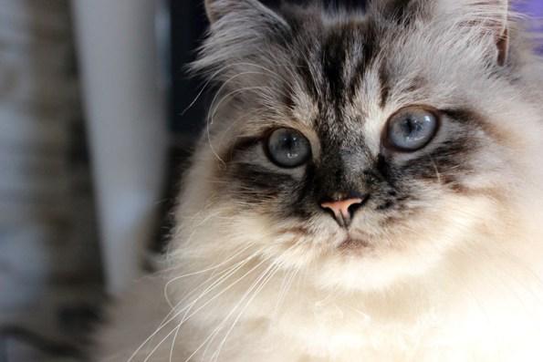 Nystagmus Point Katze