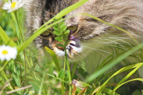 Giftige Pflanzen Für Katzen Aufgepasst