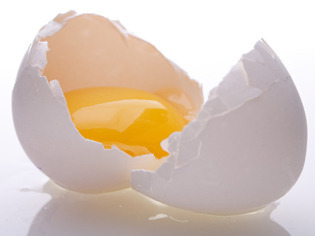 telur ayam terbaik