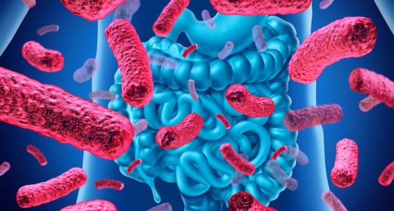 Probiotik Alami