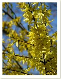 , Trochę wiosny :)