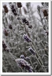 , Jak zima zaatakowała mój ogród :>