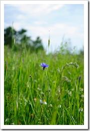 , Fotki z łąki :D