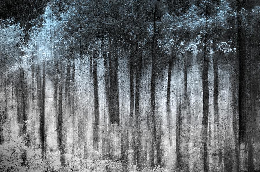 Ursula I Abresch-Gost forest