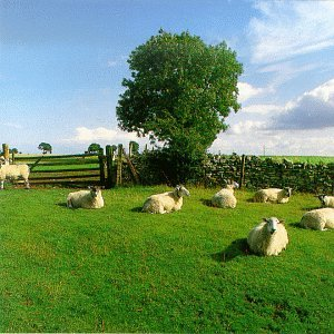 The KLF - Chill Out (1990)