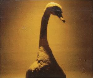 R.E.M. - Suspicion (1999)