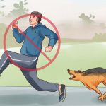 Hogyan védekezzünk a kutyatámadás ellen?