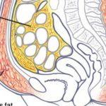 A zsírsejtjeid magukba zárhatják a mérgeket, így ölheted ki ezeket rövid idő alatt